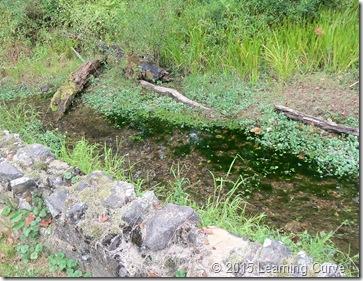 Augusta Wetlands 039
