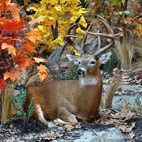 Wild Autumn by Lanis Rossi - Animals Other Mammals