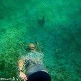 Snorkel com raias - Tintoreras - Isabela - Galápagos, Equador