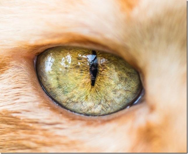 Cats Eyes5