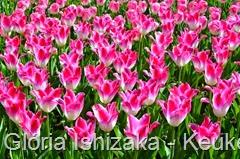 Glória Ishizaka - Keukenhof 2015 - tulipa 21