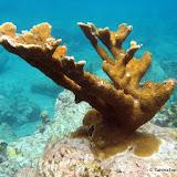 UnderwaterJacquesCousteauPark