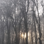 Domaine de Coubertin : lever de soleil