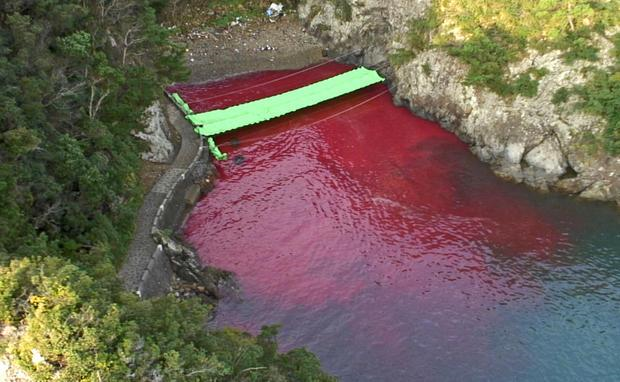 Blood stains the sea at the Cove of Taiji in Japan, after a dolphin slaughter. Photo: Oceanic Preservation Society