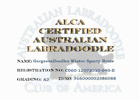 ALCA Certification of Australian Labradoodle Gorgeousdoodles Roxie.