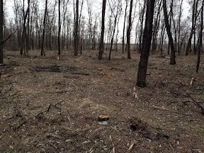 лес2.jpg