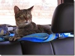 Fredy o gato viajante