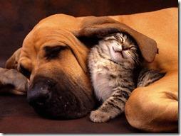 gatos divertidos buscoimagenes (2)
