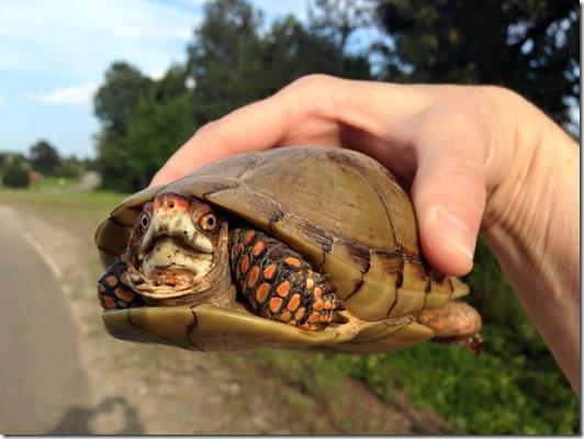 marias turtle