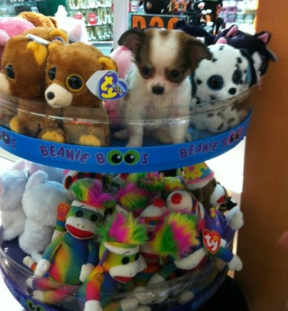 puppy pictures funny