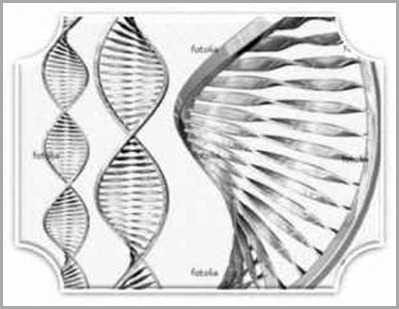 dna_humano_12_helices