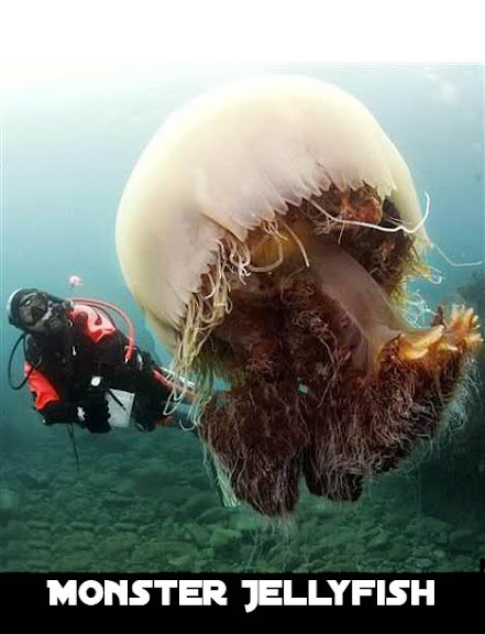 Meduza Potw�r / Monster Jellyfish (2010) PL.TVRip.XviD / Lektor PL