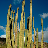 From Tucson to Organ Pipe Cactus National Monument