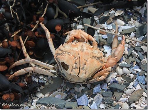 29-Dead-crab