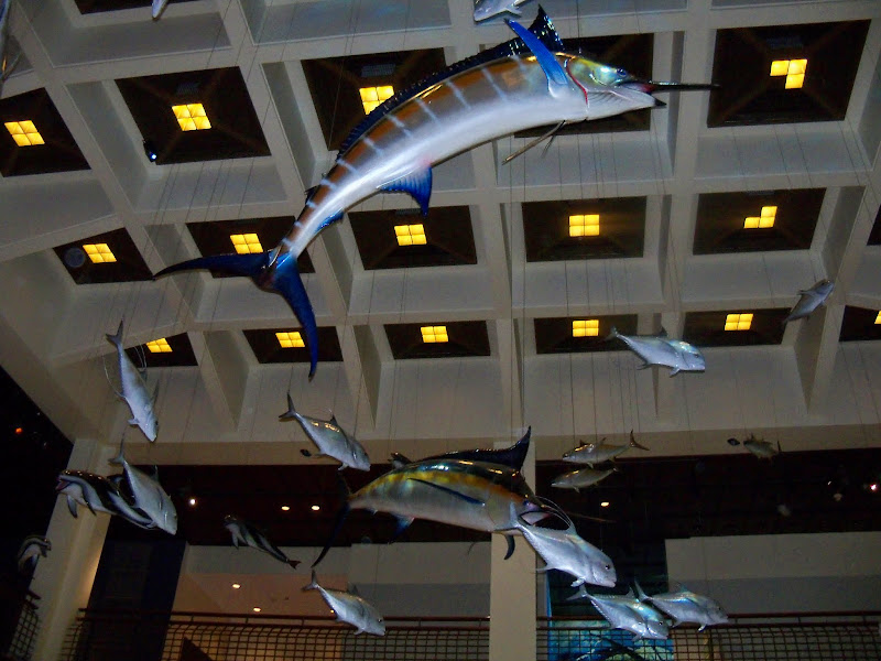 Houston Museum of Natural Science - 116_2646.JPG