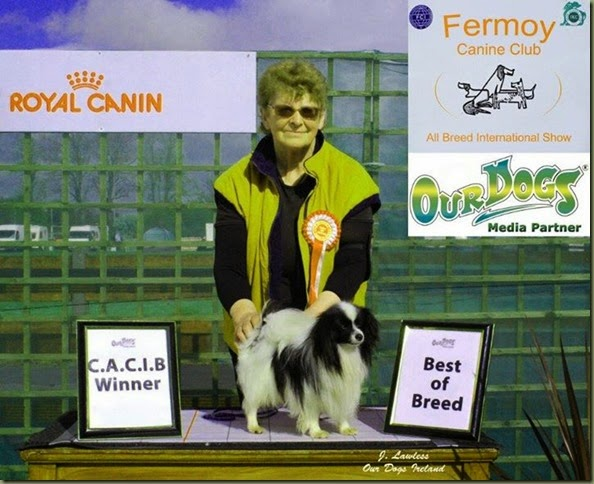 Cupcake wins 4th CACIB and is CIB CH