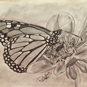 Butterfly working by Rob King - Drawing All Drawing ( pencil, sketch, butterfly, black and white, bw, flower )