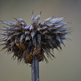 Unusual Home by Jared Van Bergen - Nature Up Close Hives & Nests ( photos, up close, wild, bees, nature, plants, photography )