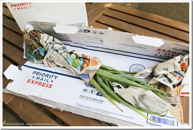 150820_aloes_from_Tony_Norris_002
