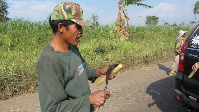A sugar cane worker cutting up a stalk for us to sample.