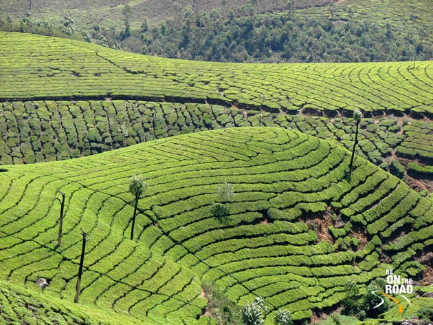Picture book view of Munnar tea estatess