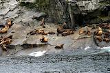 Sea Lion Rookery - Kenai Fjords, AK