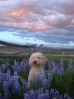 GorgeousDoodles in Colorado