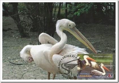 2062_Pelicanul cret_5-00lei