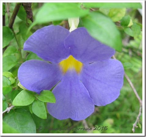 09-10-philipine-violet