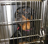 Roxanna - Roxanna was lucky to get rescued quickly. She was not comfortable in that cage!