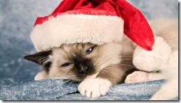 77- gatos navidad (5)- buscoimagenes