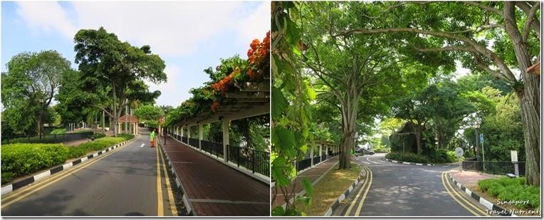 新加坡花柏山 (102)