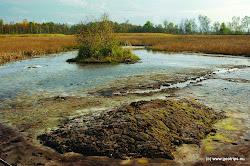 Necelé 3 km na sever od obce Tršnice se nachází národní přírodní rezervace SOOS, která se rozkládá na ploše 221 ha. Jedinečná krajina se rozkládá na odtěženém křemelinovém štítu. Doznívající posopečná činnost se projevuje vývěry minerálních pramenů a výdechy kysličníku uhličitého.