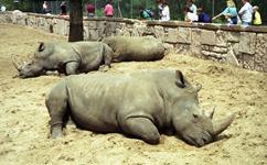 1992.07.06-103.12 rhinocéros