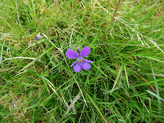 Flower near Little Meldrum