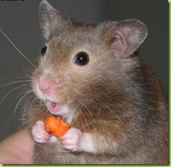 mouse-has-cheese1-1bf8sfx