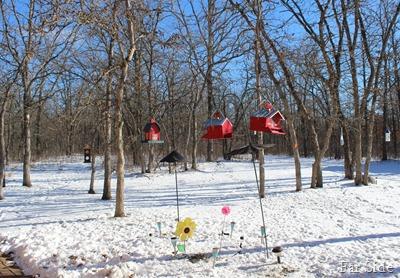 The yard November 21