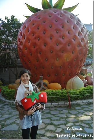 大湖草莓 (11)