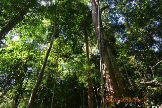 Lestarikan Hutan Lindung Tormatutung