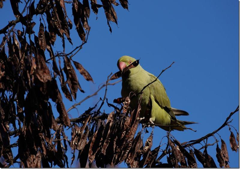 paris parrot 112215 00002