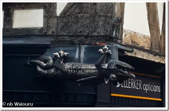 lizard.jpg (1 of 1)
