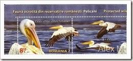 2061_8-10lei_Pelican-comun