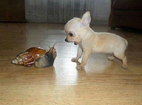 puppy funny pictures