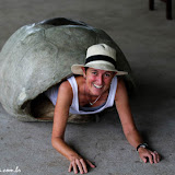 Tartaruga ninja - Puerto Ayora, Santa Cruz - Galápagos, Equador