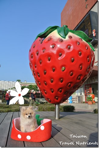 大湖草莓 (3)