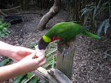 Someone feeding a lorikeet at the Nashville Zoo 09032011b