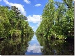 Dismal Swamp Sunny Day 1