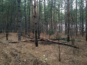 лес34.jpg