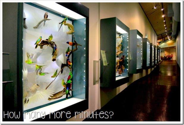 Museum & Art Galeery of the NT | How Many More Minutes?