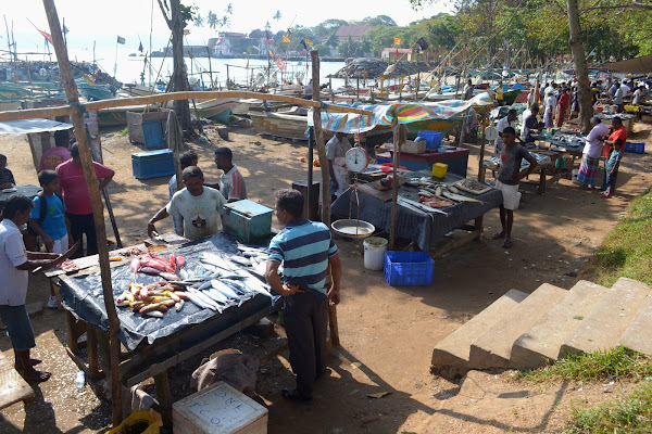 рыбный рынок, рыбаки